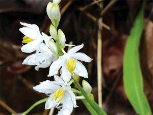 Plantas Medicinales Más Efectivas Para Detener la Eyaculación Precoz