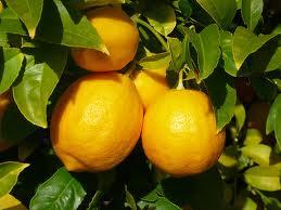 Qué Tan Bueno es el Limón Para la Eyaculación Precoz